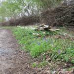Ride side dead hedge