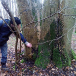 Woodland health checks